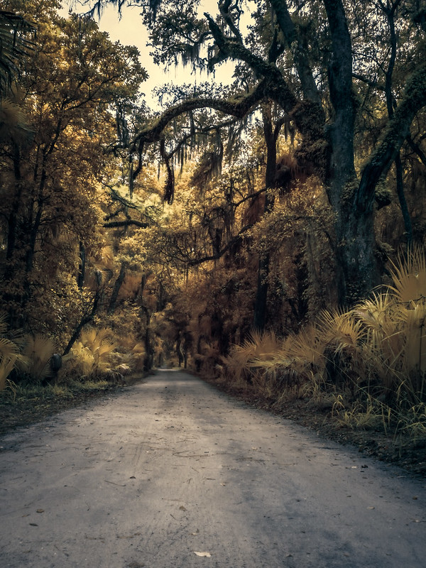 The dirt road leading out of Bulow Creek Plantation.