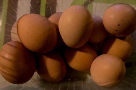 Eleven eggs