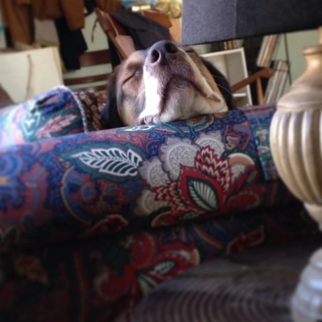 Nap time. #roland #doglife