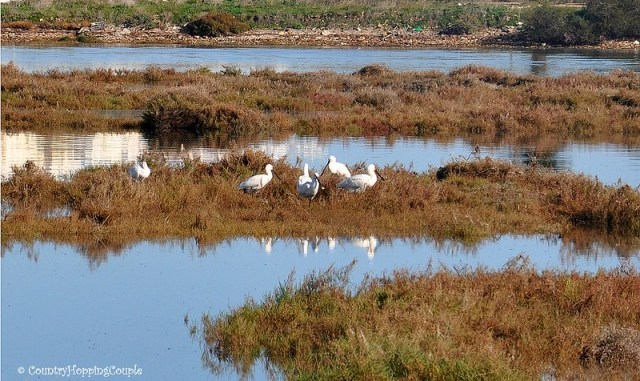 Bird Watching in Ria Formosa Nature Park