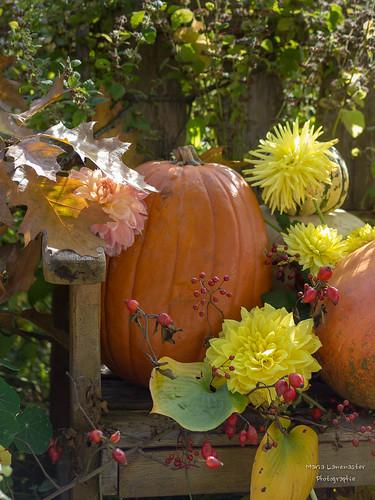 Die Schönheit des Herbstes