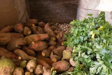 Turnips, potatoes and celeriacs