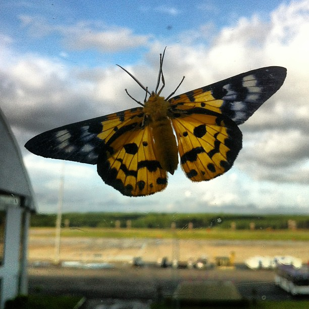A moth can be as beautiful as a butterfly. Seen at Krabi Airport. #iseefreedom