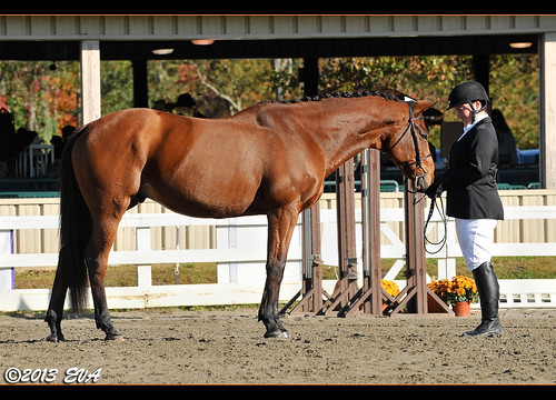 Wizard was a supermodel during his Model Geldings class