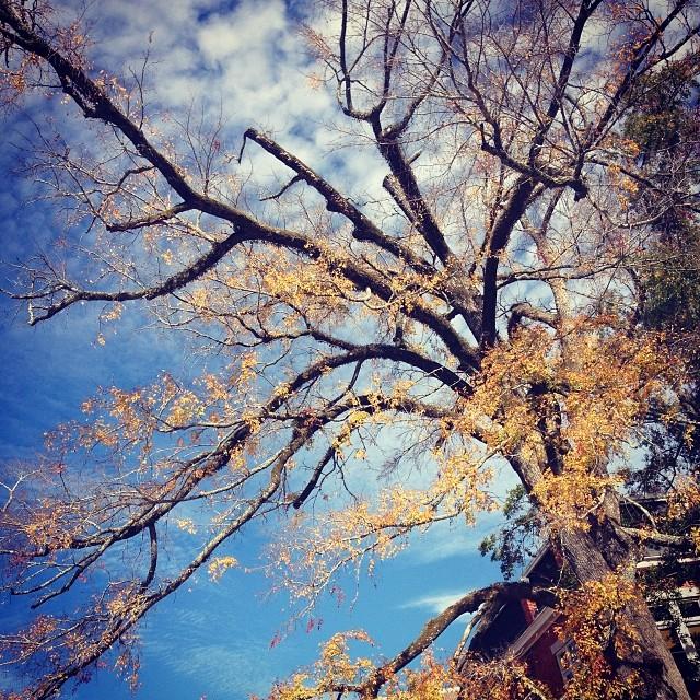 Cool tree on campus.