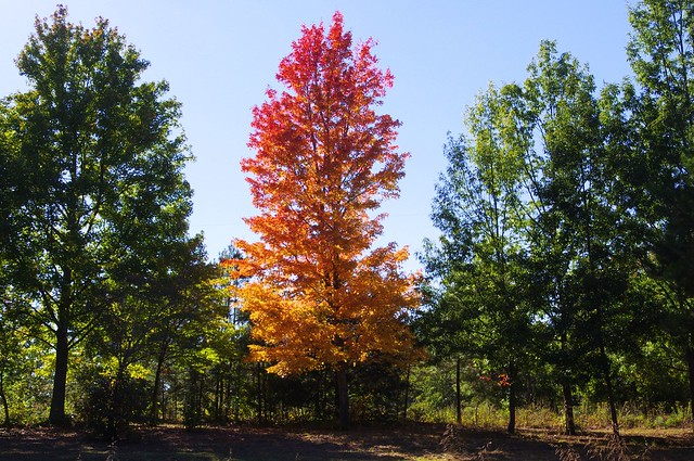 Fall Colors, West Central Arkansas, October 19, 2013