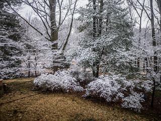 Snow-005