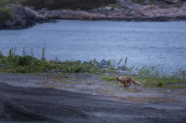 Roadtrip til Kristiansund #016