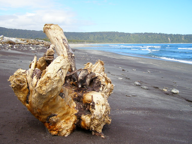Driftwood on Bruce's Beach, New Zealand