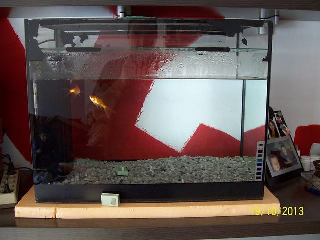 L'aquari muntat