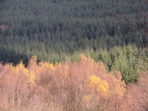 Late autumn Scotland