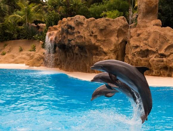 LoroParque-Delphinshow3