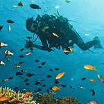 Scuba Diver at Phi Phi Island