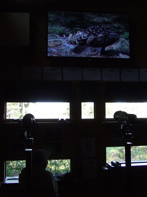 Loch Garten Osprey Centre 4