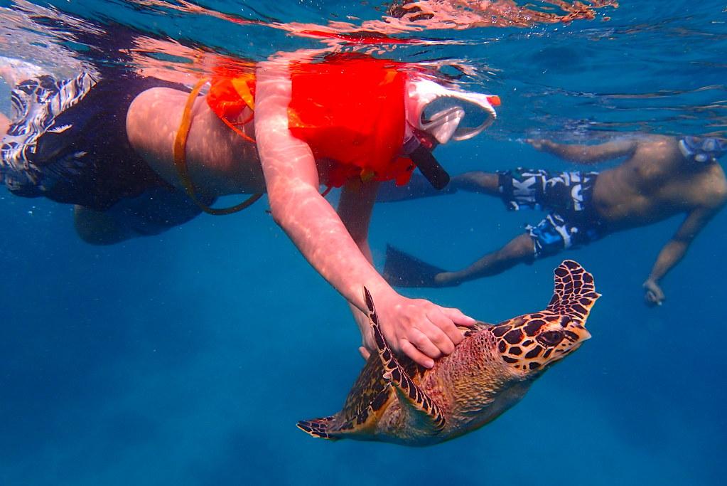 Sea turtle in Maldives