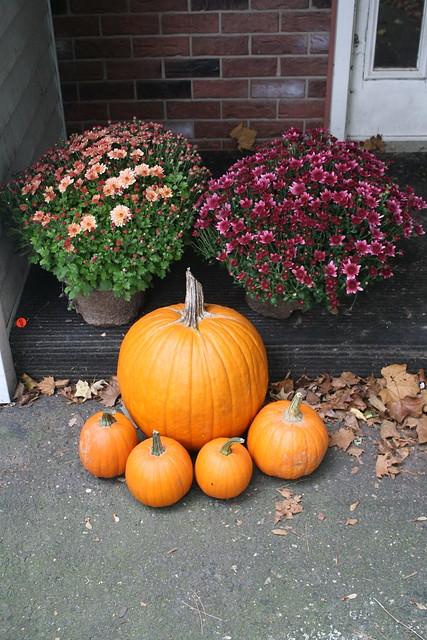 mums n pumpkins