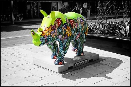 Go Rhinos: Wonderland by Davidap2009