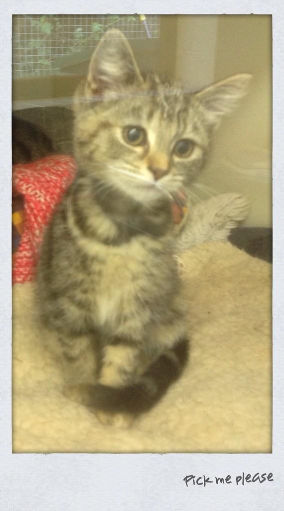 RSPCA kitten