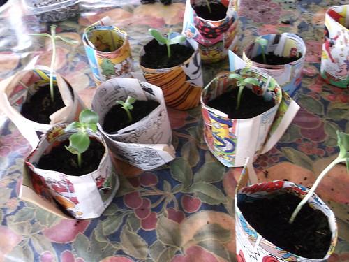 sun-flower-paper-pots