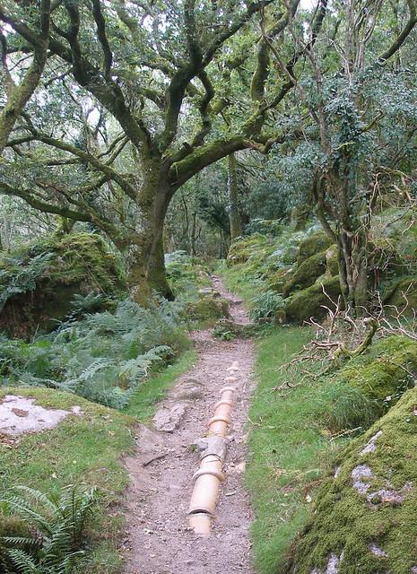 Ceramic pipeline, Plym Valley, Dartmoor