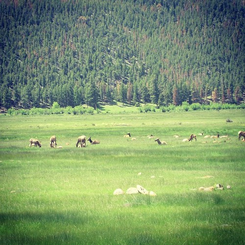 Elk #estespark #colorado by @MySoDotCom
