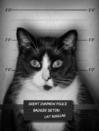 45/52 Cat Burglar