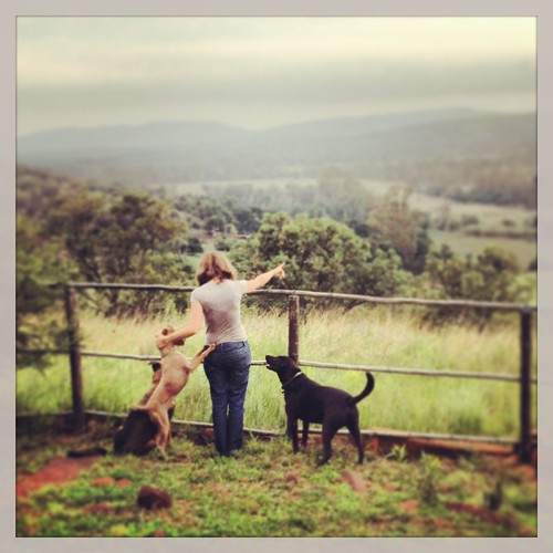 Showing the dogs the panorama