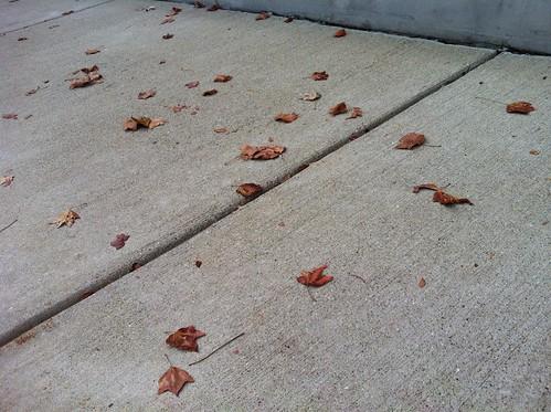 Leaves on the Sidewalk