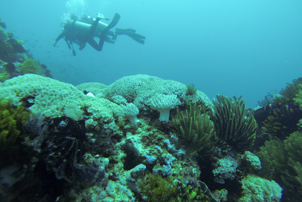 La Laguna, Diving