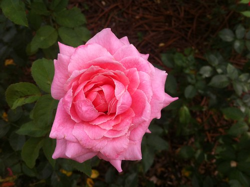 Garden Beauty by theadventuresofbeka