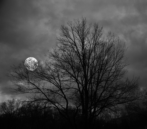 Full Moon Behind Leafless Tree by dagnyg