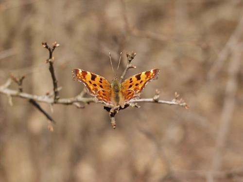 #holzvonhier, Schmetterling-2