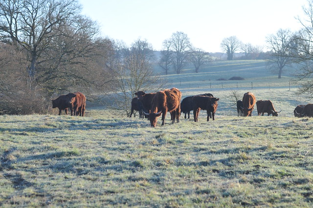 a bit frosty