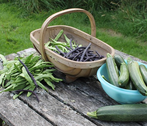 beans beans and courgettes