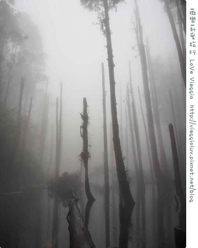 南投景點,忘憂森林 @薇樂莉 Love Viaggio | 旅行.生活.攝影