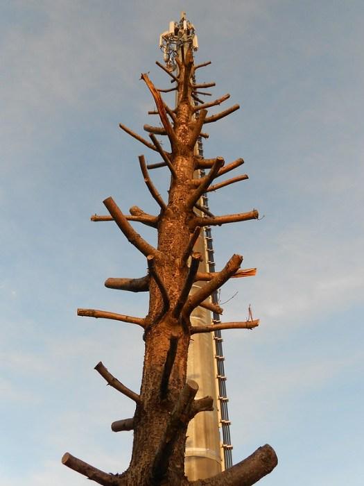 dove finisce il vecchio albero inizia quello nuovo