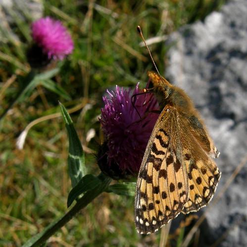 Avid nectar feeder IV