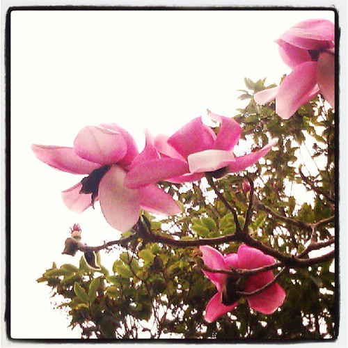 Oh my gosh! I am claiming Spring!! #magnoliaexcitement