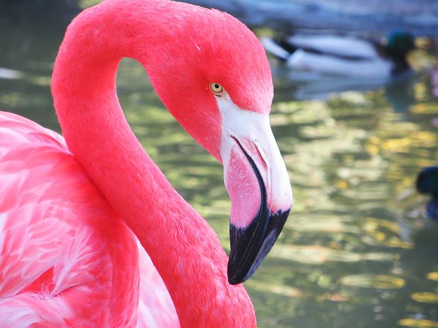 San Diego Zoo 14