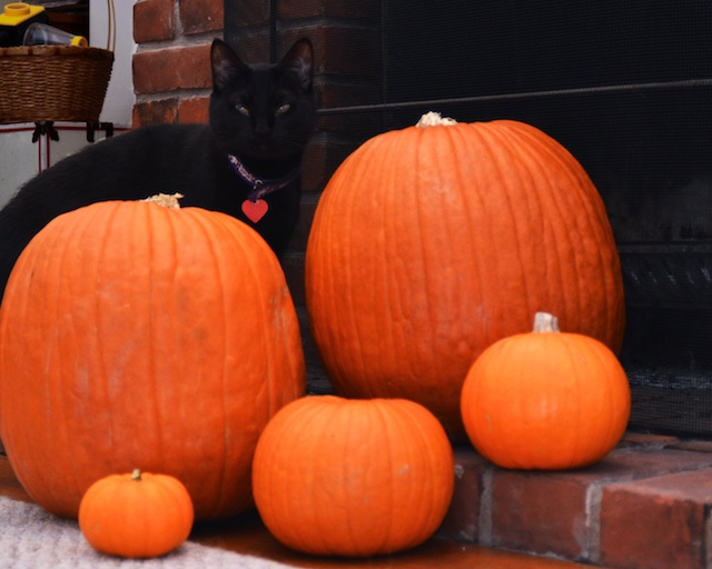 Luna and the Pumpkins