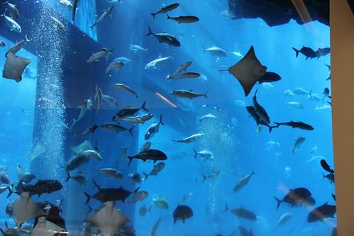 Tunnel in Dubai Aquarium & underwater park