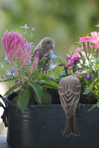 birds and flowers (4/6)