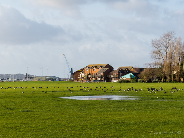 Lots of oystercatchers and geese on the Baiter