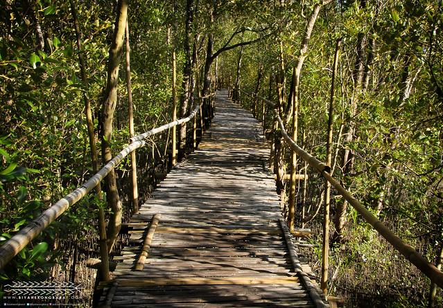 Bamboo trail Bakhawan Eco Park Research Kalibo Aklan
