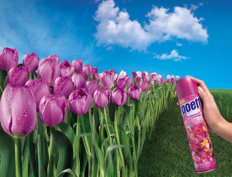Poett - Tulipe
