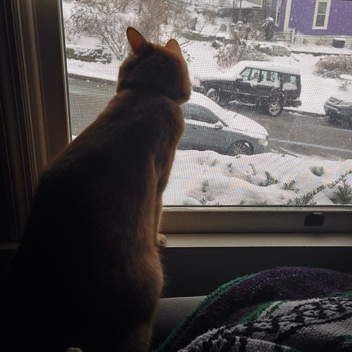 Watching the snow. #cats #catsofinstagram #ColumbiaTusculum