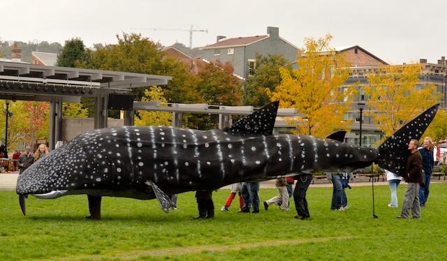 Whale Shark Puppet 1
