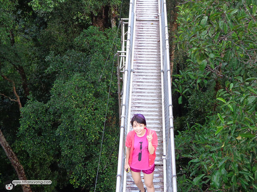 tiffany yong canopy walk