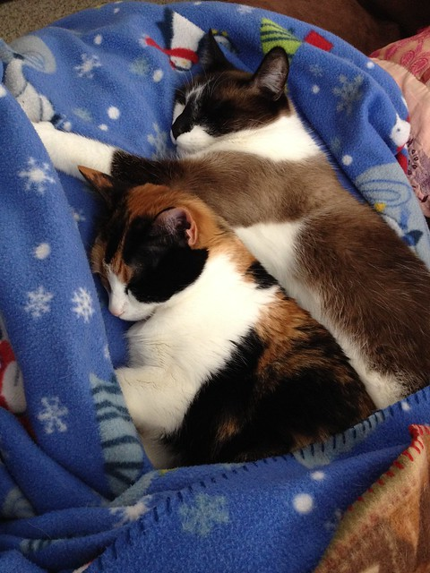 cats in a blanket #project365