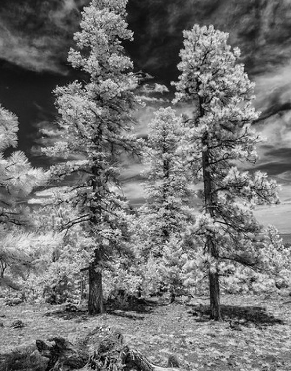 Larb Hollow #4 - Nikon 1 V1 - 6,7-13mm - Infrared 700nm
